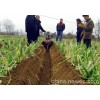 开沟培土机自制培土机视频威马培土机新款培土机果园开沟机